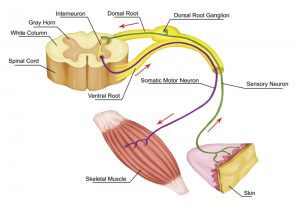 This is a reflex arc where involuntary muscle stimulation takes place to protect the area at risk of injury.