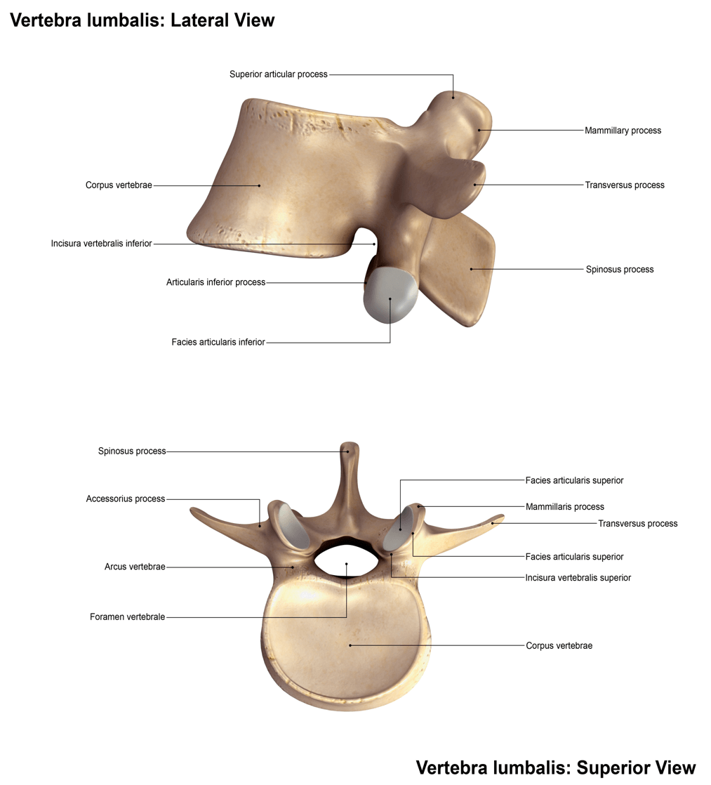 Lateral and Superior View