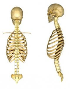 Normal spine anatomy