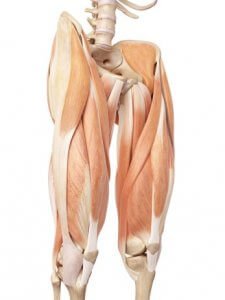 Resisted hip flexion (hip flexor muscles)