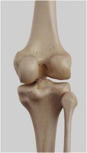 Posterior view of right knee