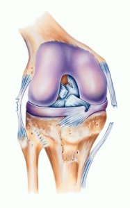 ACL injury mechanism