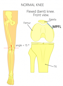 Axial view of knee