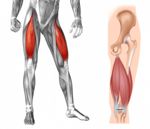 Strengthening with ROM knee