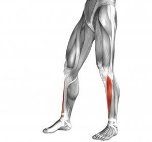 Resisted ankle dorsiflexion