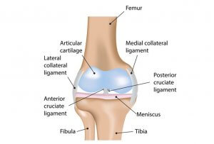 Coronal view right knee
