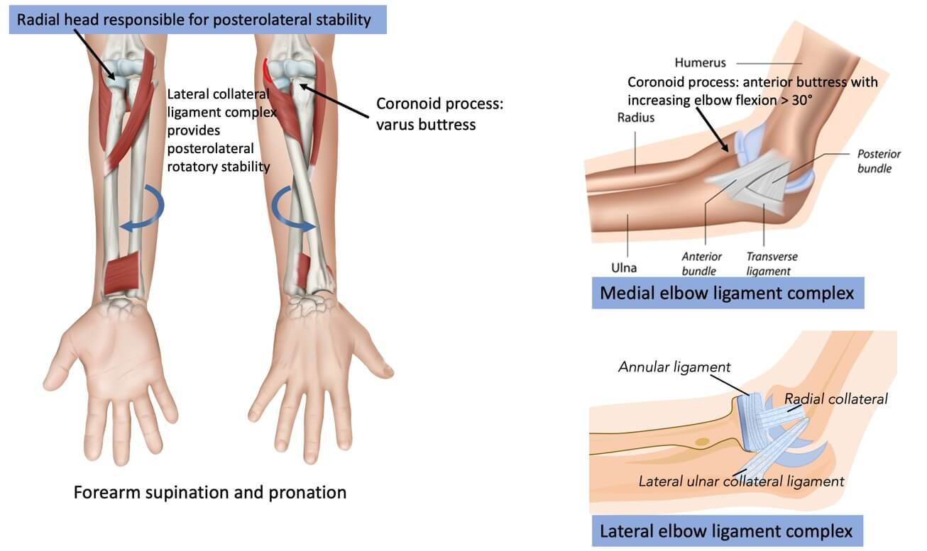 Elbow joint structural stability structures