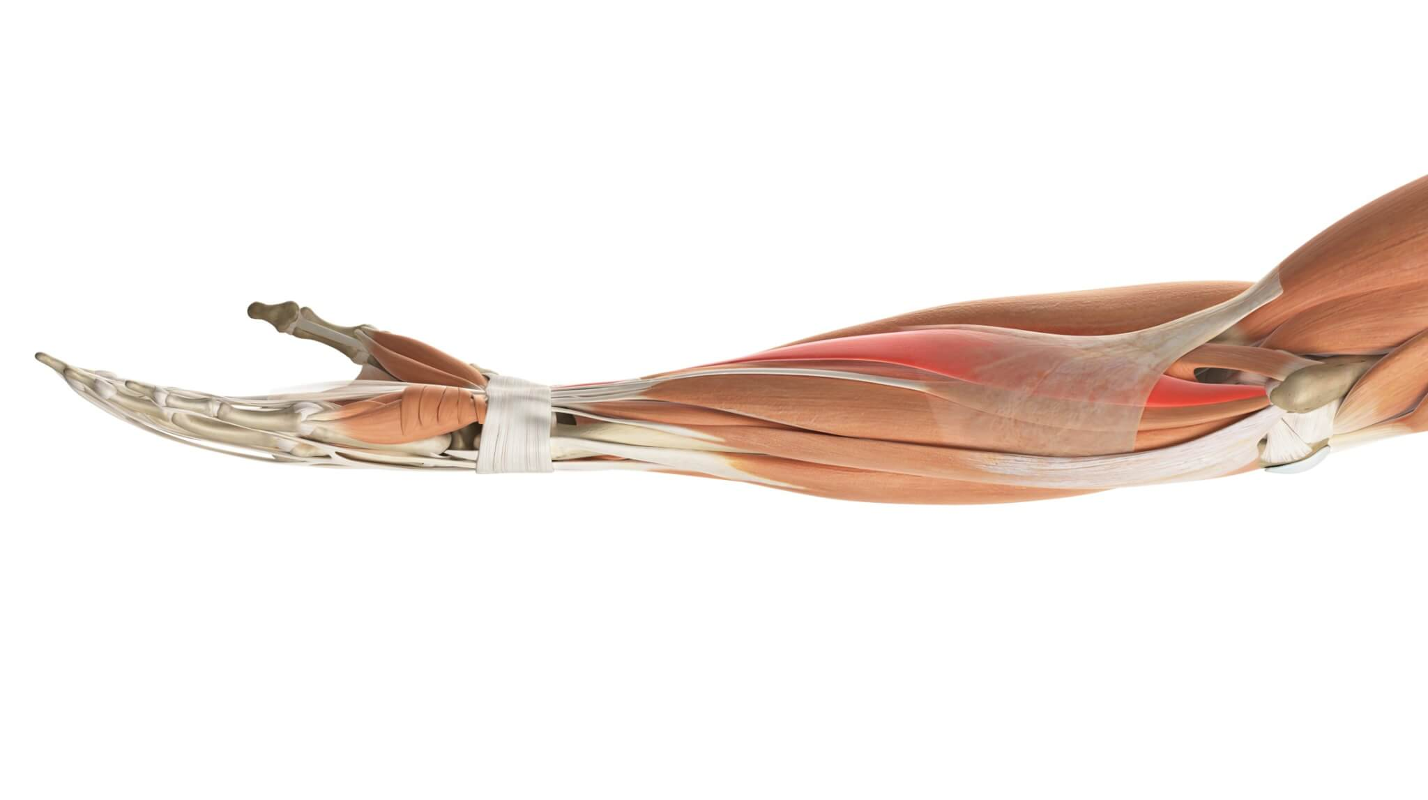 Medial aspect of right forearm