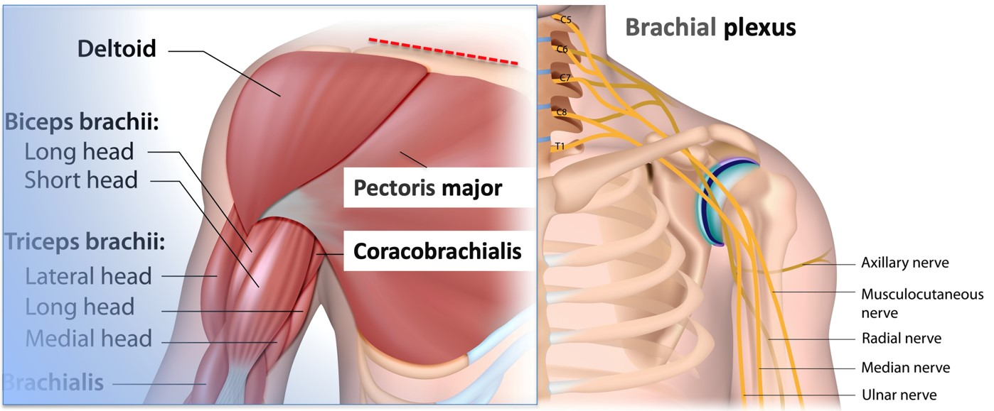 Surgery approach of Clavicle fractures